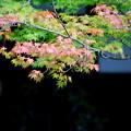 写真: はじまった紅葉