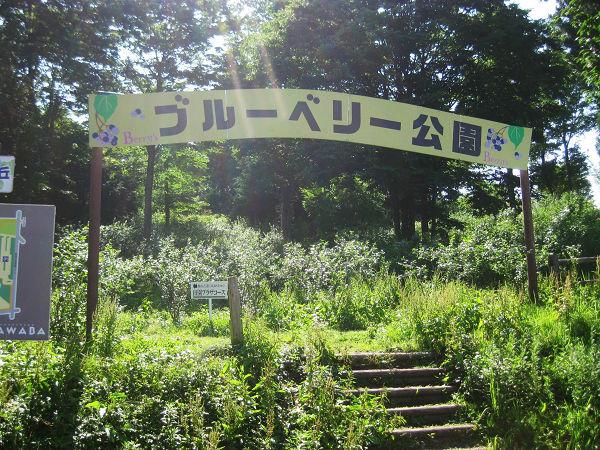 14.57 ブルーベリー公園 入口s