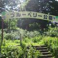 Photos: 14.57 ブルーベリー公園 入口s