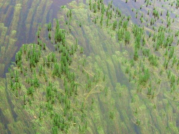 13.59 川の藻s