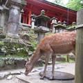 春日大社と鹿。