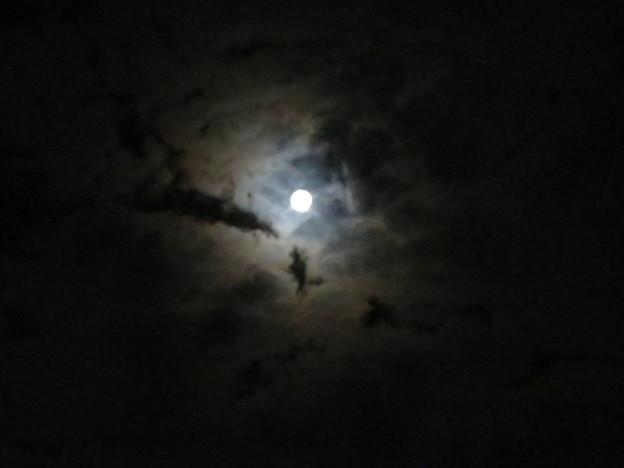 Photos: 十五夜