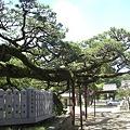 Photos: 鹿児の浜松