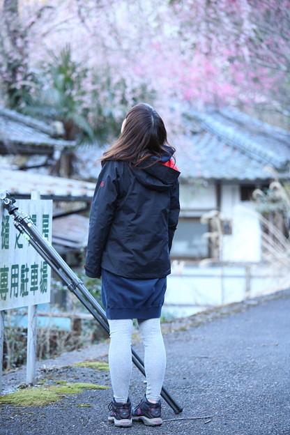 Photos: 桜巡礼`12'(身延、久遠寺、桜と人編)-5