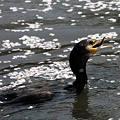 Photos: 小さい魚だなぁ
