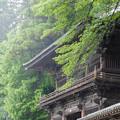 雨の大悲願寺山門