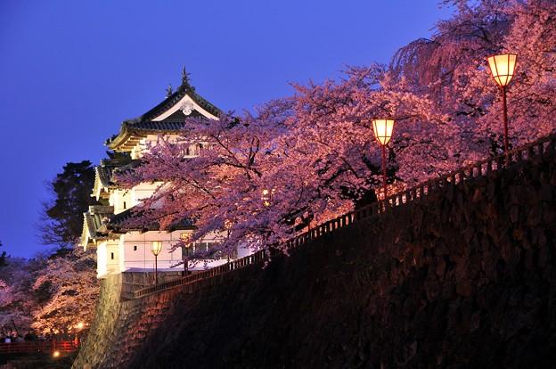 ライトアップされた弘前城と本丸の夜桜