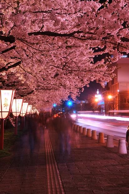 弘前公園の長い夜桜トンネル・・・