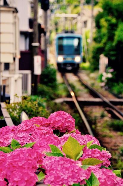 ひっそりと咲く紫陽花。。でも際立つ。。6月20日