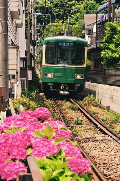 江ノ電の車窓を彩る紫陽花。。6月20日