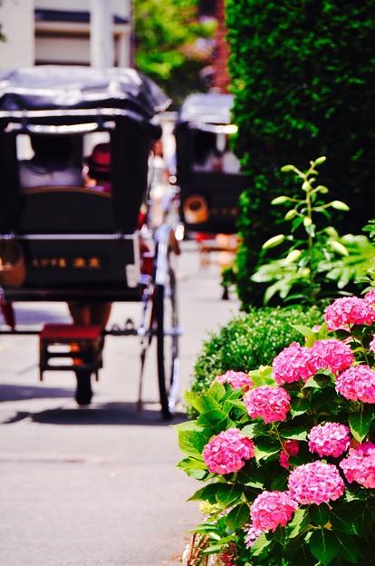 人力車と紫陽花。。長谷駅付近の光景。。6月20日