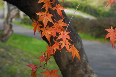 竜田川公園の紅葉-3