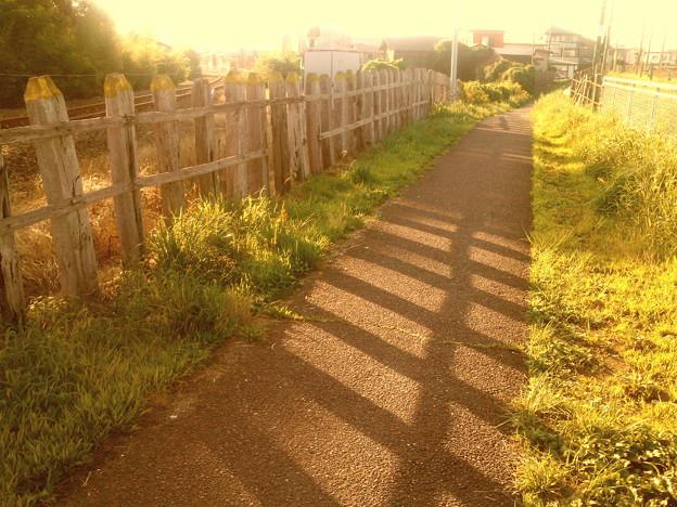 枕木柵と影