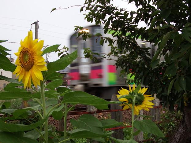 向日葵と701系