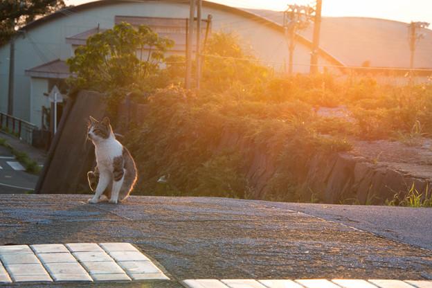 写真: 夕やけニャンニャン(池島)