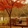 Photos: 秋は静かに