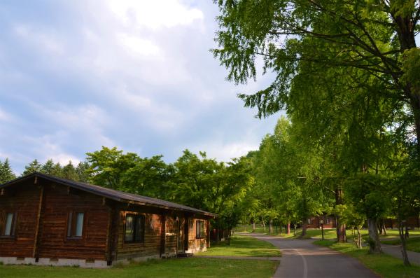朝の新鮮な空気と緑に包まれながら歩く