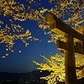 夕月桜(^0^)