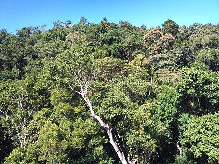 スカイレールから見た熱帯雨林 1