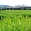 Photos: JR南部線 多摩川鉄橋