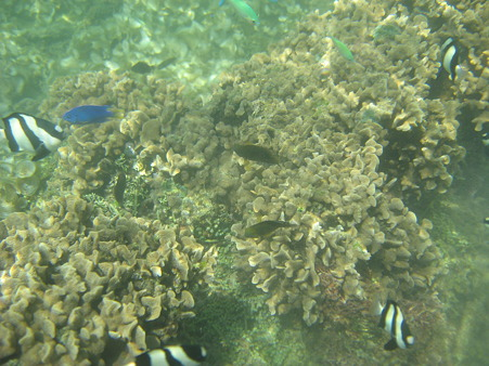 アルパット島近くで熱帯魚その02