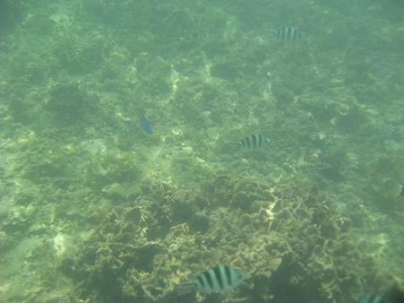 アルパット島近くで熱帯魚その09