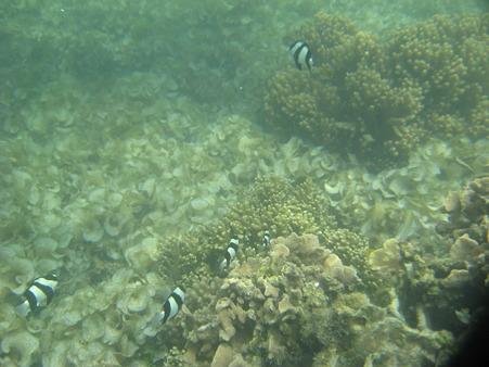 アルパット島近くで熱帯魚その20