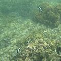 写真: アルパット島近くで熱帯魚その20
