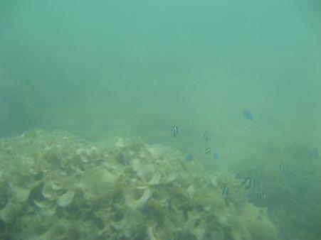 相方撮影の熱帯魚09