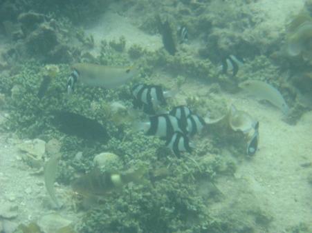 相方撮影の熱帯魚31