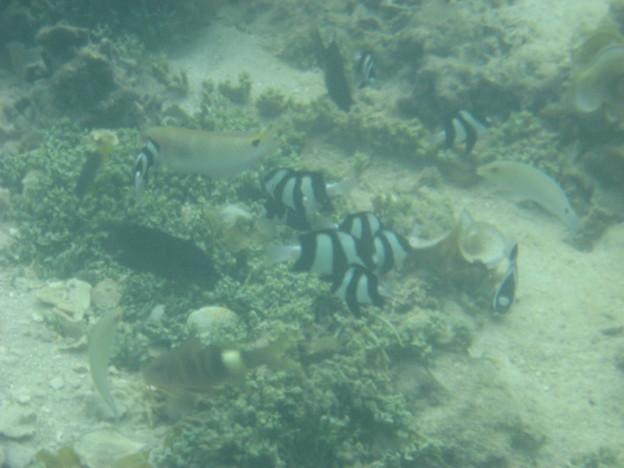 Photos: 相方撮影の熱帯魚31