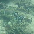 写真: 相方撮影の熱帯魚31