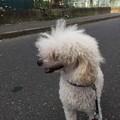 Photos: モフ太散歩