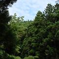 滑沢渓谷の杉林