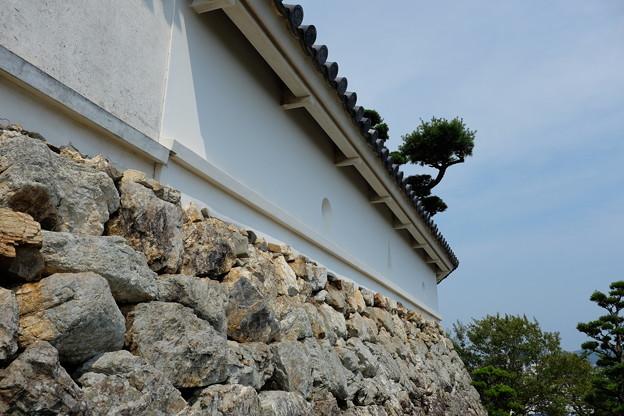 高知城の石垣と土塀