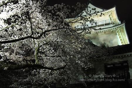 小田原城夜桜