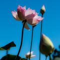 Photos: 安らかに ~A wish in peace~