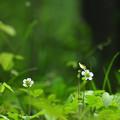 野原に咲く花