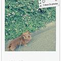 Photos: PicMonkey 簡単 画像 加工 おしゃれ picnik  ポラロイド 素敵 アンティーク