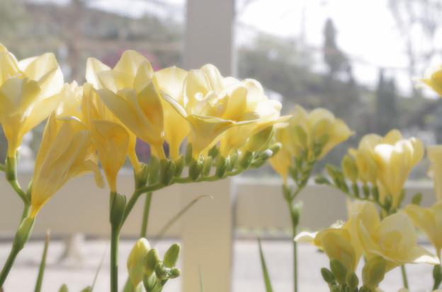 Photos: 並び咲く