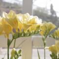 写真: 並び咲く