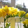 写真: 並び咲く(CI:雅)
